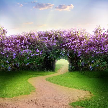 Photo pour Road in magic spring forest - image libre de droit