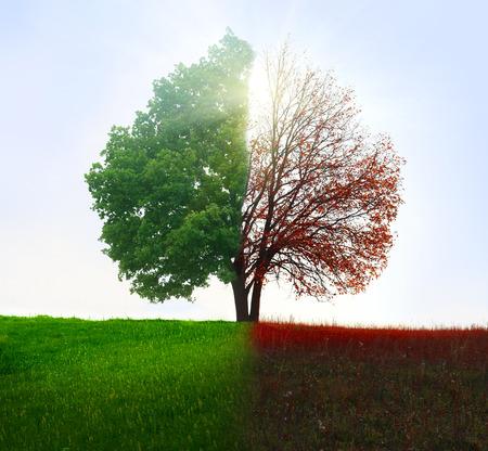 Foto de Season change. From summer to autumn. - Imagen libre de derechos