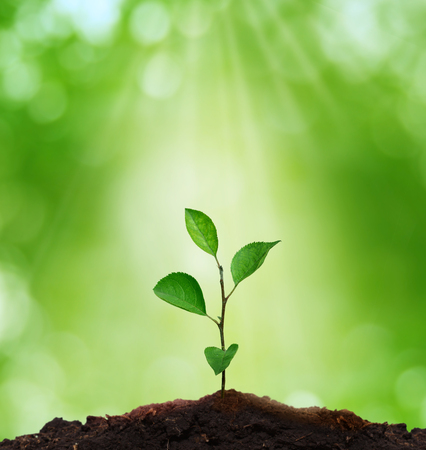 Photo pour New life.Environment concept.Sprout in green background. - image libre de droit