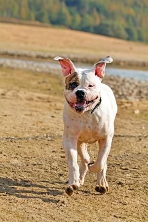 happy dog on the run