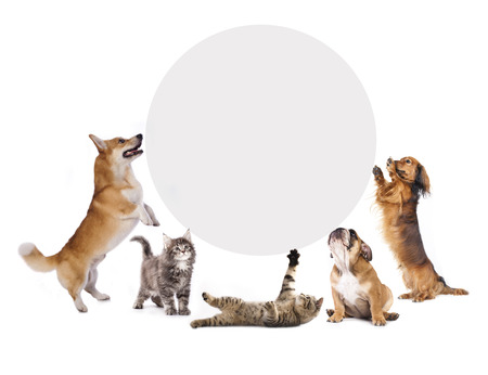cats and dogs holding a cork banner