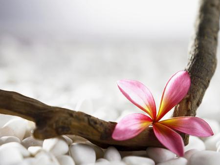 Foto de pink flower rest on wood with stone background - Imagen libre de derechos
