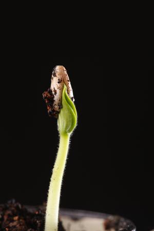 Foto de A new life growth on dirt - Imagen libre de derechos