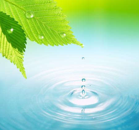 Foto de Water drop on leaf - Imagen libre de derechos