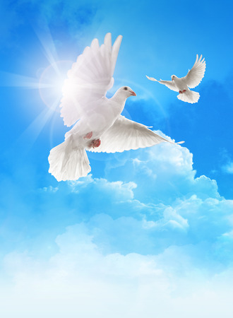 Photo for White doves in blue sky - Royalty Free Image