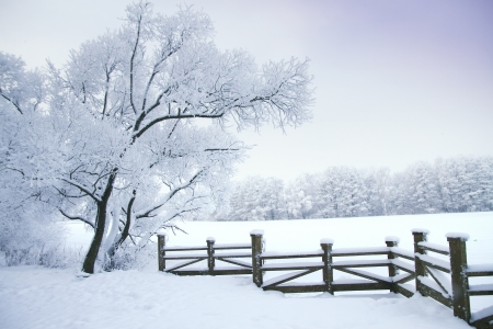 Photo for Winter's Tale - Royalty Free Image
