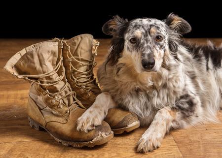 Border collie Australian shepherd mix dog lying down on tan veteran service military combat boots looking sad grief stricken in mourning depressed abandoned alone emotional bereaved worried feeling heartbreak
