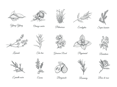 Ilustración de Herbs and spices set. - Imagen libre de derechos