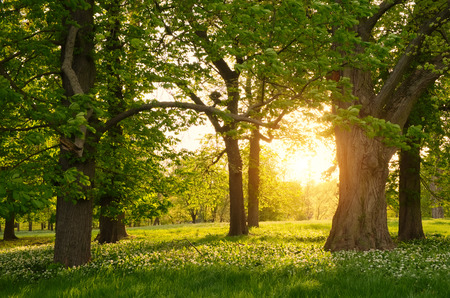 Photo pour Sunlight in the green forest springtime - image libre de droit