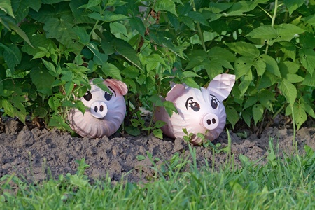 toy pigs, made by hand from a plastic bottles