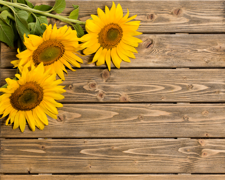 Foto de Three sunflowers are on the wooden background. These flowers are represented at left top corner. The space may be used for your ideas. - Imagen libre de derechos