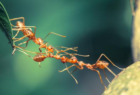 Photo pour Ant bridge unity - image libre de droit