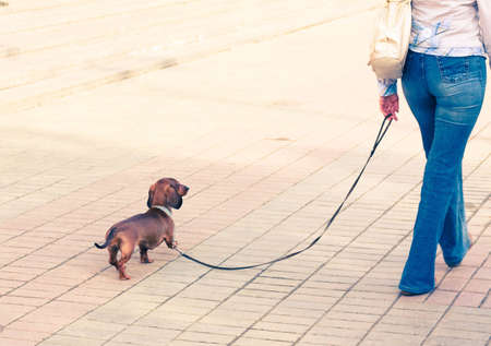Girl walking with her pet