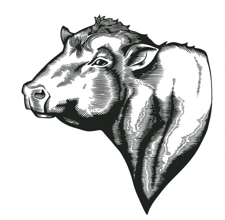 Ilustración de Head of bull of dangus breed drawn in vintage woodcut style. Farm animal isolated on white . illustration for agricultural market identity, products , advertisement - Imagen libre de derechos