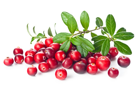 Photo for Ripe cranberries with leaves on white background - Royalty Free Image