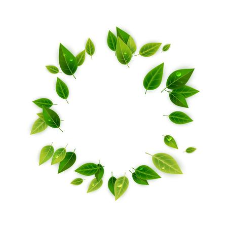 Ilustración de Green leaves decorative frame, vector illustration - Imagen libre de derechos