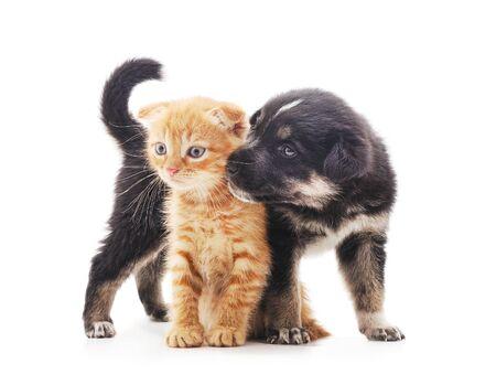 Foto de Black dog with a kitten isolated on a white background. - Imagen libre de derechos