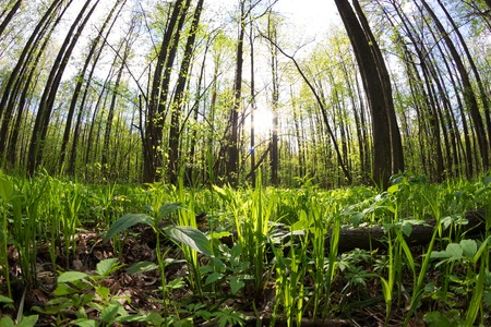 Photo for green forest in spring. sunlight. fisheye lens - Royalty Free Image