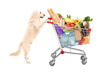 Funny retriever dog pushing a shopping cart full of food products, isolated on white background