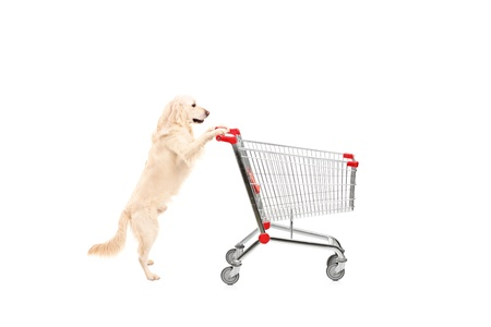Cute dog pushing an empty shopping cart isolated on white background