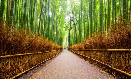 Photo for Path to bamboo forest Arashiyama Kyoto Japan - Royalty Free Image