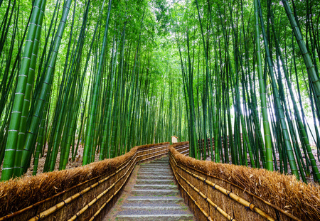 Photo for Path to bamboo forest, Arashiyama, Kyoto, Japan - Royalty Free Image