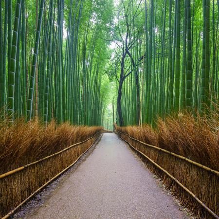 Photo for Path to bamboo forest, Arashiyama, Kyoto, Japan - Royalty Free Image