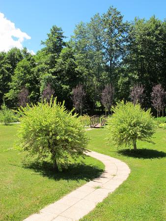 Foto de Japanese willow bush in a well kept garden - Imagen libre de derechos