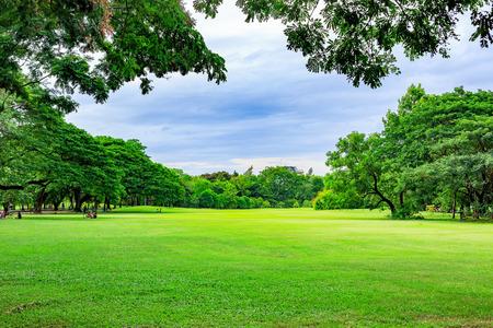 Foto de Public park background on a summer day - Imagen libre de derechos