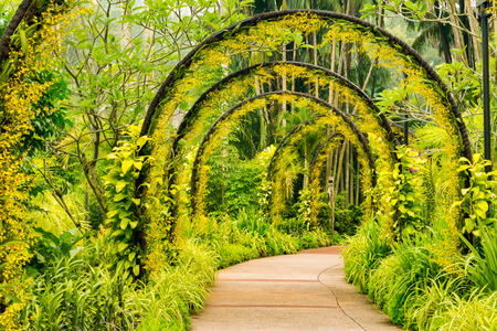 Photo for Arch way of yellow orchid from Singapore National Orchid Garden - Royalty Free Image