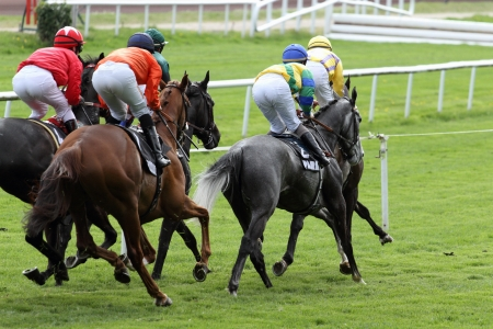 details of a Horse Racing