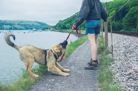 Foto de A naughty dog is pulling on his leash and almost falling into a lake - Imagen libre de derechos