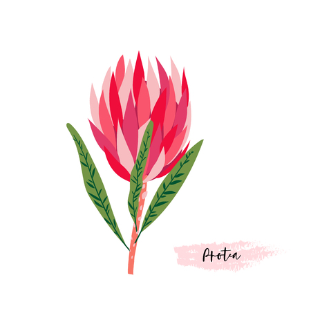 Illustration for Set of protea flowers in a digital modern art at a bright pink, red, rose and green colors. - Royalty Free Image
