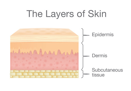 Illustration pour The Layer of Human Skin in vector style and components information. Illustration about medical and health. - image libre de droit