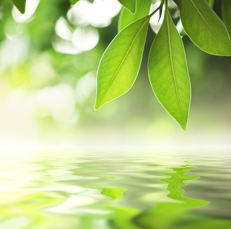 Green leaves reflecting in water, closeup.