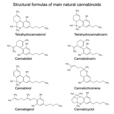 Illustration for Chemical formulas of natural cannabinoids - Royalty Free Image