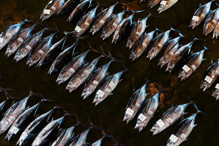 Foto de Tuna auction, Japan - Imagen libre de derechos