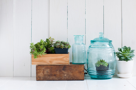 Photo pour Vintage home decor: houseplants, green succulents, old wooden boxes and vintage blue glass bottles on white wooden board, cozy home interior. - image libre de droit