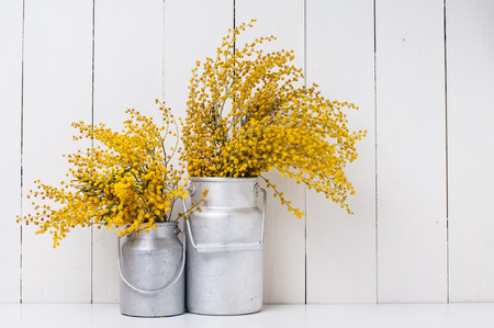 Foto de mimosa yellow spring flowers in vintage aluminum cans on white barn wall background - Imagen libre de derechos