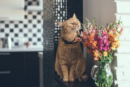 Foto de Domestic red cat smelling the flowers in a modern home interior - Imagen libre de derechos