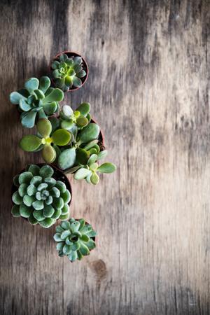 Photo pour Green house plants potted, succulents in a basket - image libre de droit