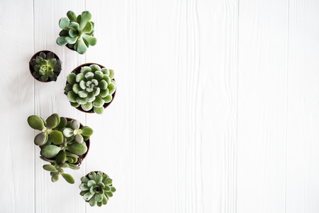 Photo for Green house plants potted, succulentson clean white wooden backg - Royalty Free Image
