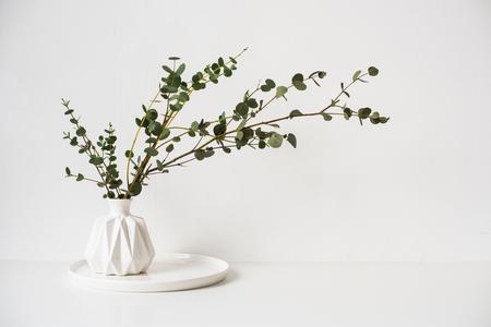 Photo pour Eucalyptus branches in white ceramic vase on empty wall background - image libre de droit