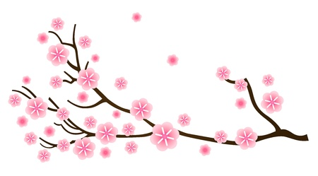 Cherry blossom, detail of sakura branch. Vector