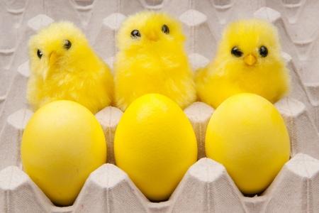 three yellow chickens