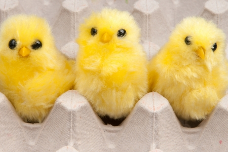 yellow chickens in box