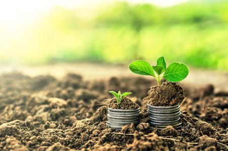 Photo pour Golden coins in soil with young plant. Money growth concept. - image libre de droit