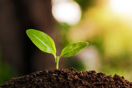 Photo pour young plant grow and sunshine - image libre de droit