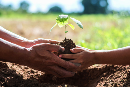 Foto de father and children help plant trees to help reduce global warming. - Imagen libre de derechos