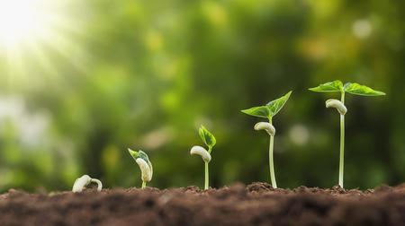 Foto für concept agriculture planting seeding growing step in garden with sunshine - Lizenzfreies Bild